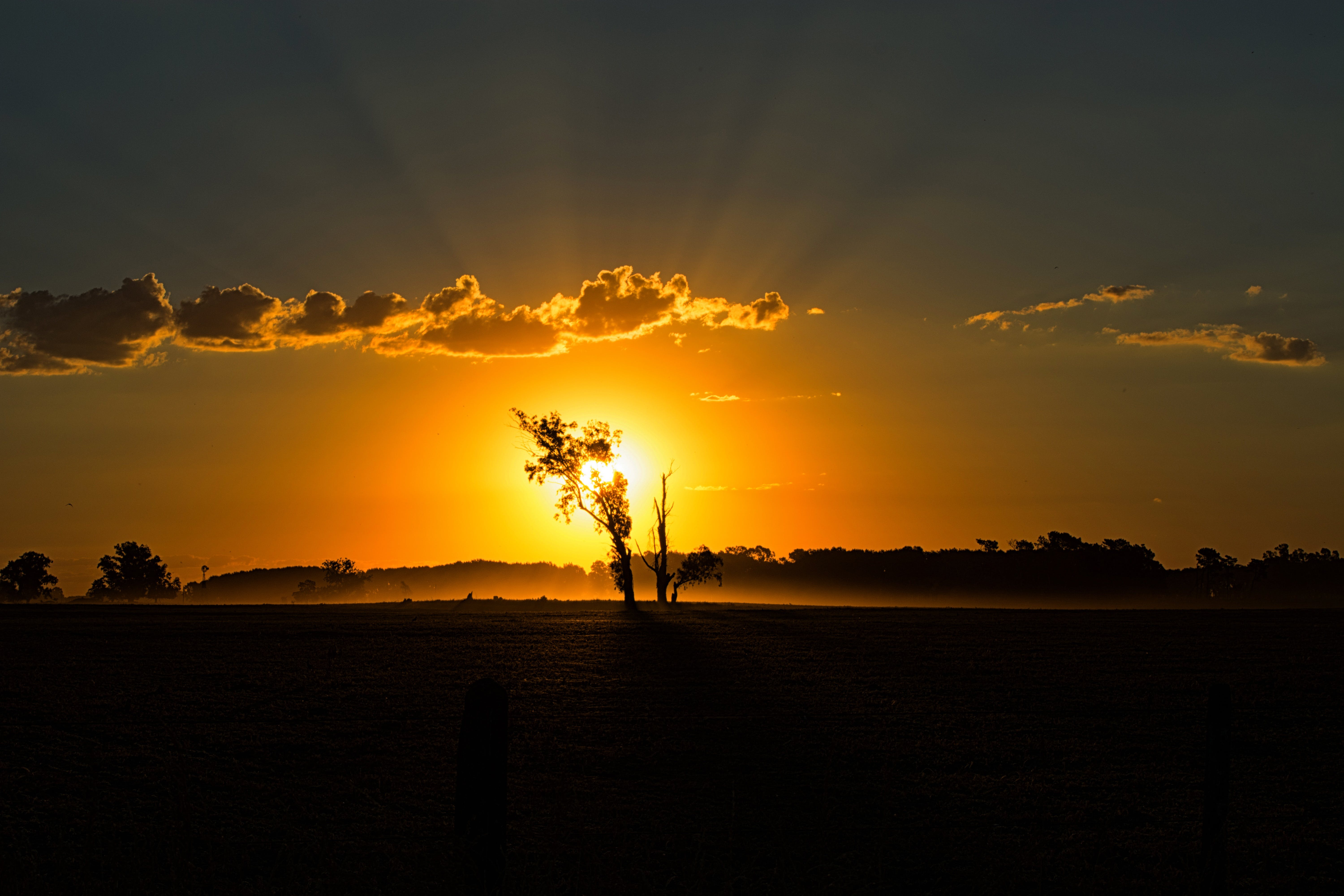 Silhouette of Tree during Dunset Photography