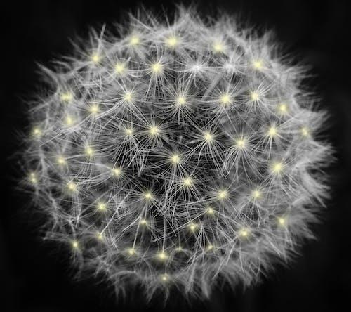 Gratis lagerfoto af blomst, close-up, fokus, luftslør