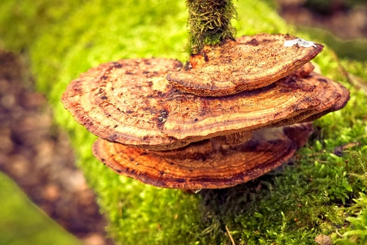 Free stock photo of nature, grass, moss, blur
