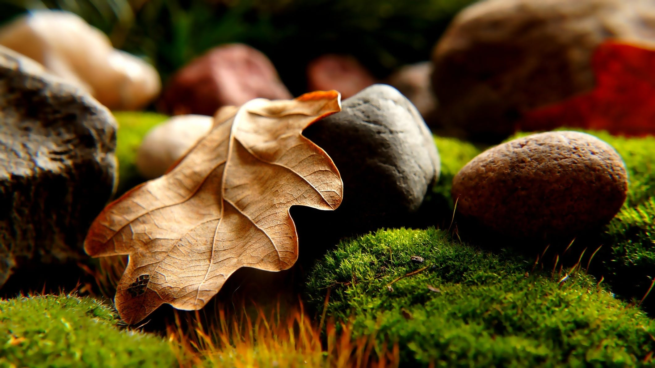 Leaf Surrounded by Rocks