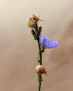 nature, blue, flower
