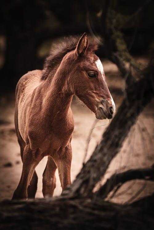 Ilmainen kuvapankkikuva tunnisteilla aavikko, arizona, hevonen, hevosen pää