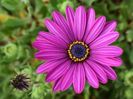 Free stock photo of petals, plant, blur, plants