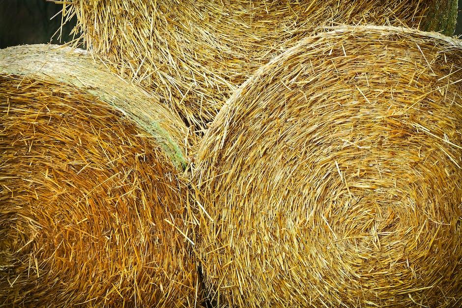 New free stock photo of field, texture, farm