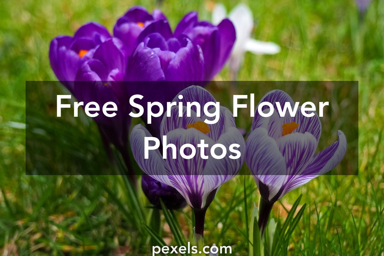 1000 Great Spring Flower Photos Pexels Free Stock Photos