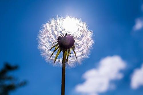Безкоштовне стокове фото на тему «блакитне небо, вродлива, делікатний, дикий»