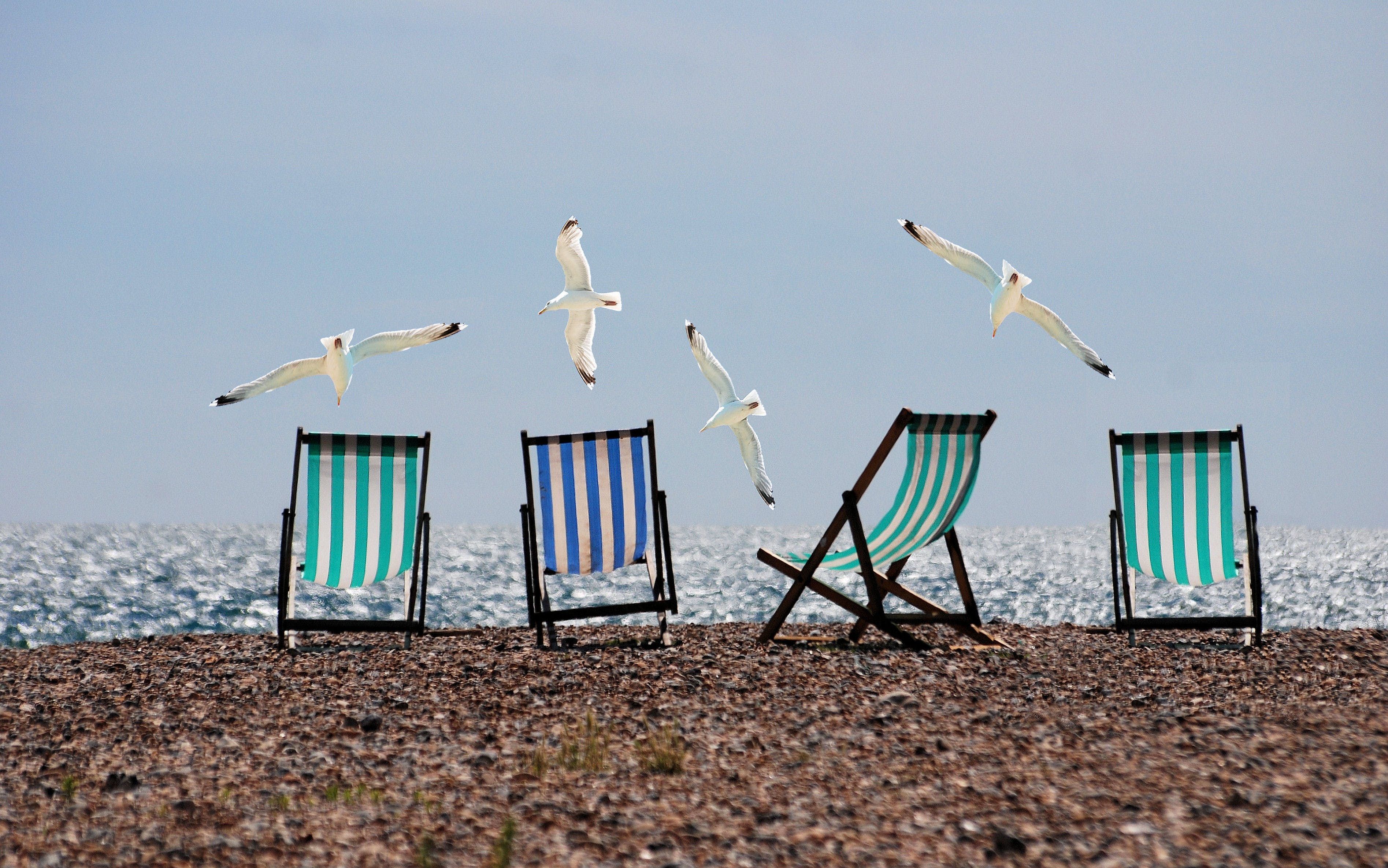 Black White and Blue Lounge Chair on and White Bird