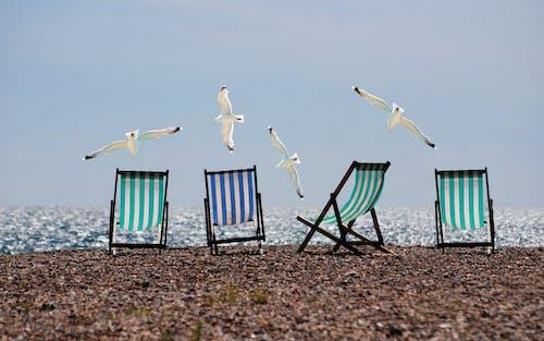 Photos gratuites de animaux, chaises longues, côte, goéland