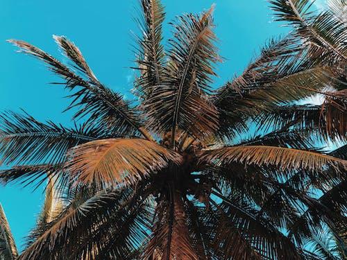 Foto d'estoc gratuïta de #celestun #yucatan #vivisphoto #travel