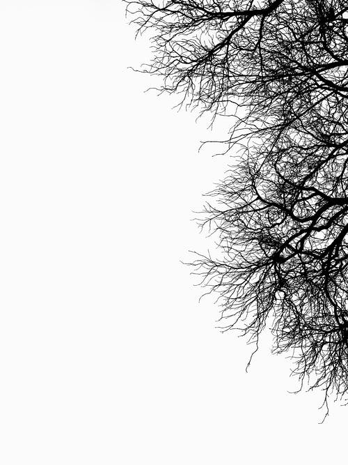 Leafless curved branches of high tree