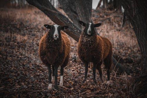 Çiftlik, çim, hayvan, hayvan çiftliği içeren Ücretsiz stok fotoğraf