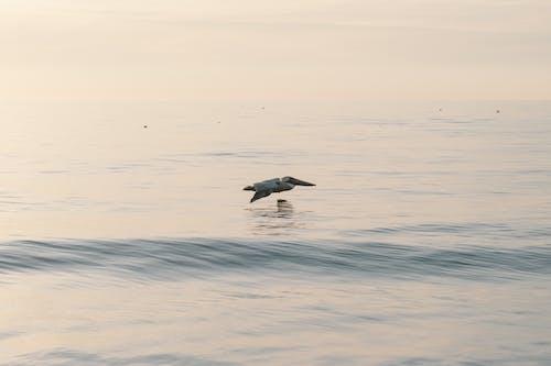 Ilmainen kuvapankkikuva tunnisteilla florida, kuilu, lentäminen, lintu