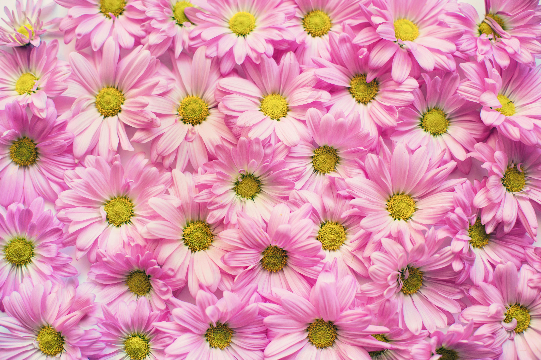 Background Flowers Elitadearest