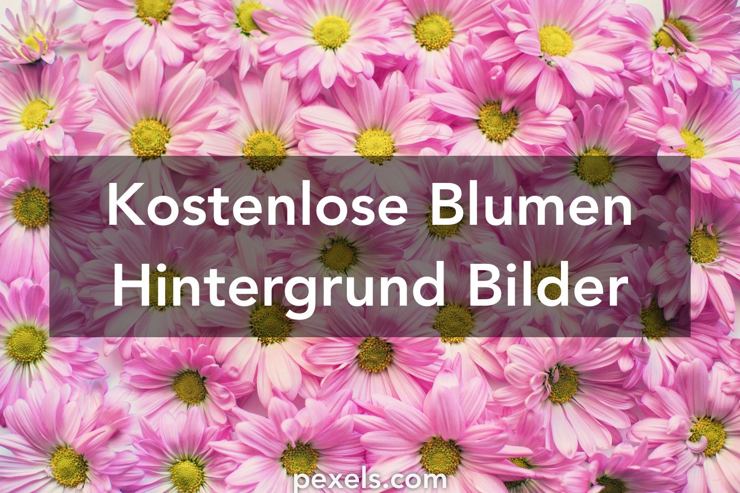 1000 blumen hintergrund fotos pexels kostenlose stock fotos. Black Bedroom Furniture Sets. Home Design Ideas