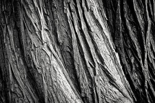 Gray Tree Trunk