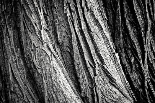 Free stock photo of wood, black-and-white, nature, dirty