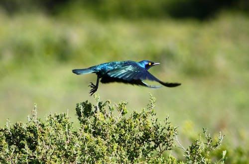 Free stock photo of africa, animal, bird, birdwatching