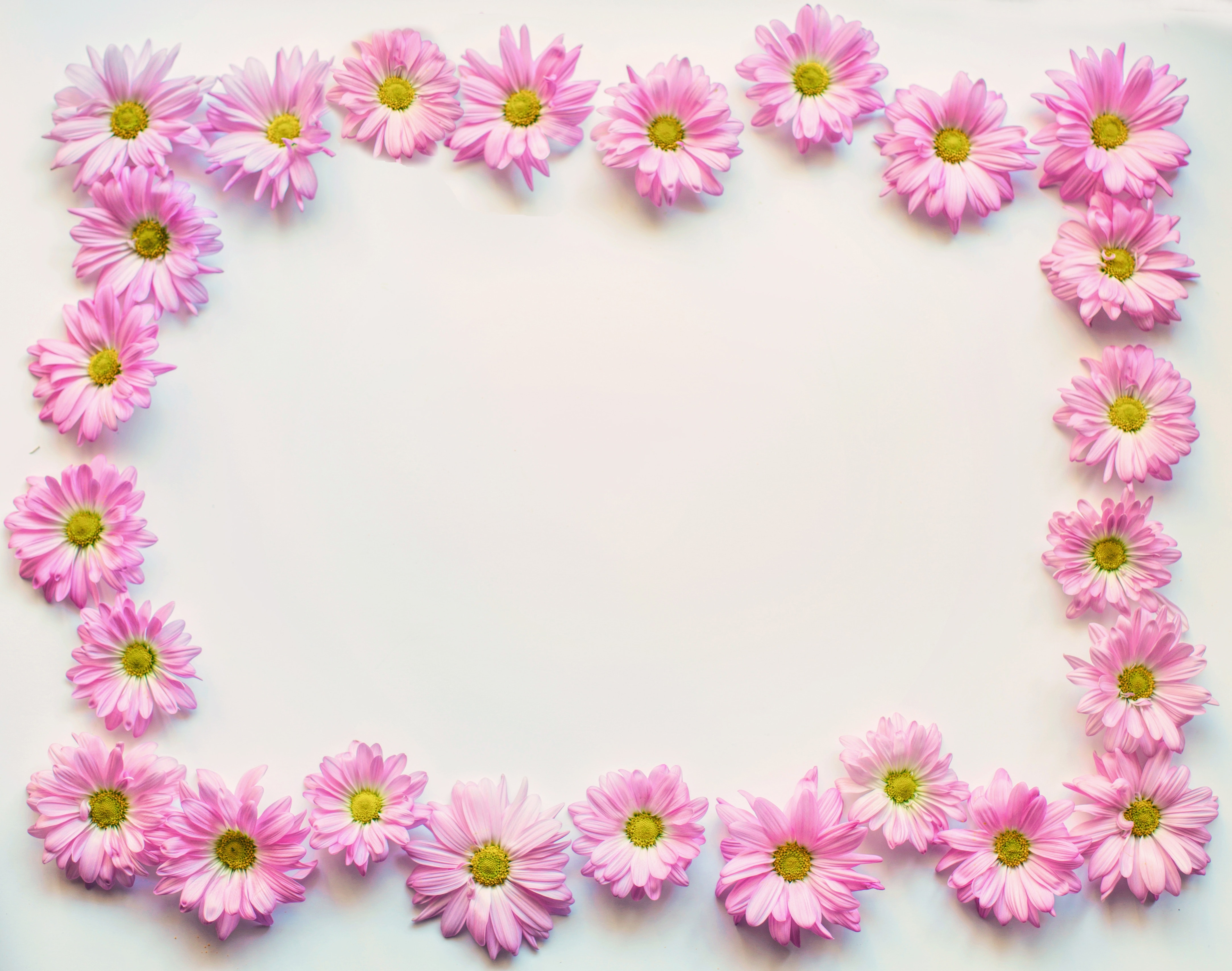 Free Stock Photo Of Blooms Blossoms Border