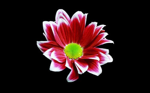 Foto profissional grátis de aumento, botânico, brilhante, broto