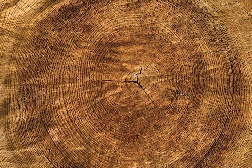 Foto stok gratis kasar, kayu, kayu gelondongan, kayu keras