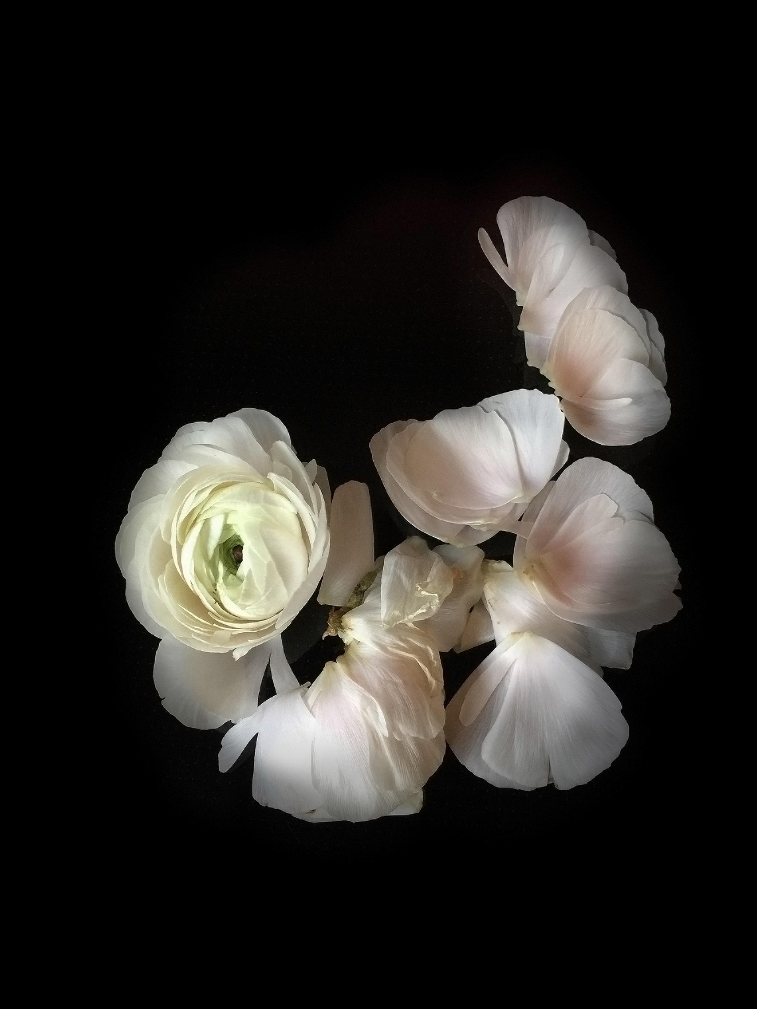 Kostenloses Foto Zum Thema Blumen Flora Kontrastierend
