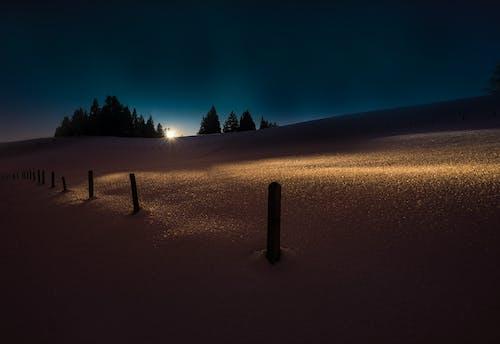 Darmowe zdjęcie z galerii z ciemność, drzewa, idylliczny, jasny