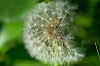 nature, garden, blur