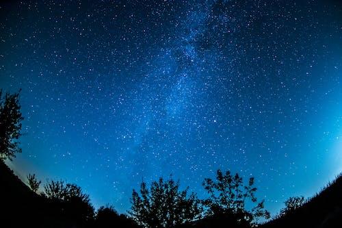 Plants Under Starry Sky