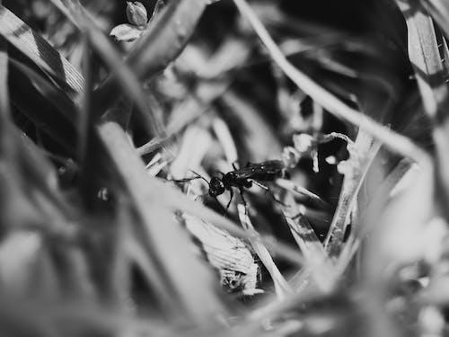 アウトドア, コントラスト, 昆虫, 白黒の無料の写真素材
