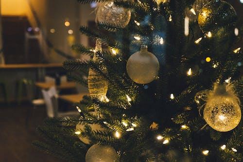 Безкоштовне стокове фото на тему «дерево, Різдво, різдвяна прикраса, Різдвяна ялинка»