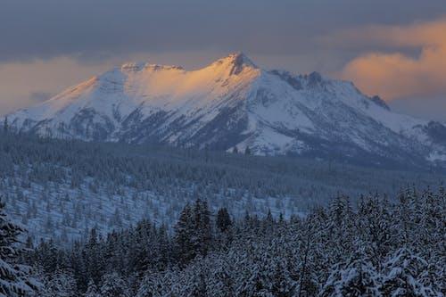 Základová fotografie zdarma na téma alpský, denní světlo, divočina, hory