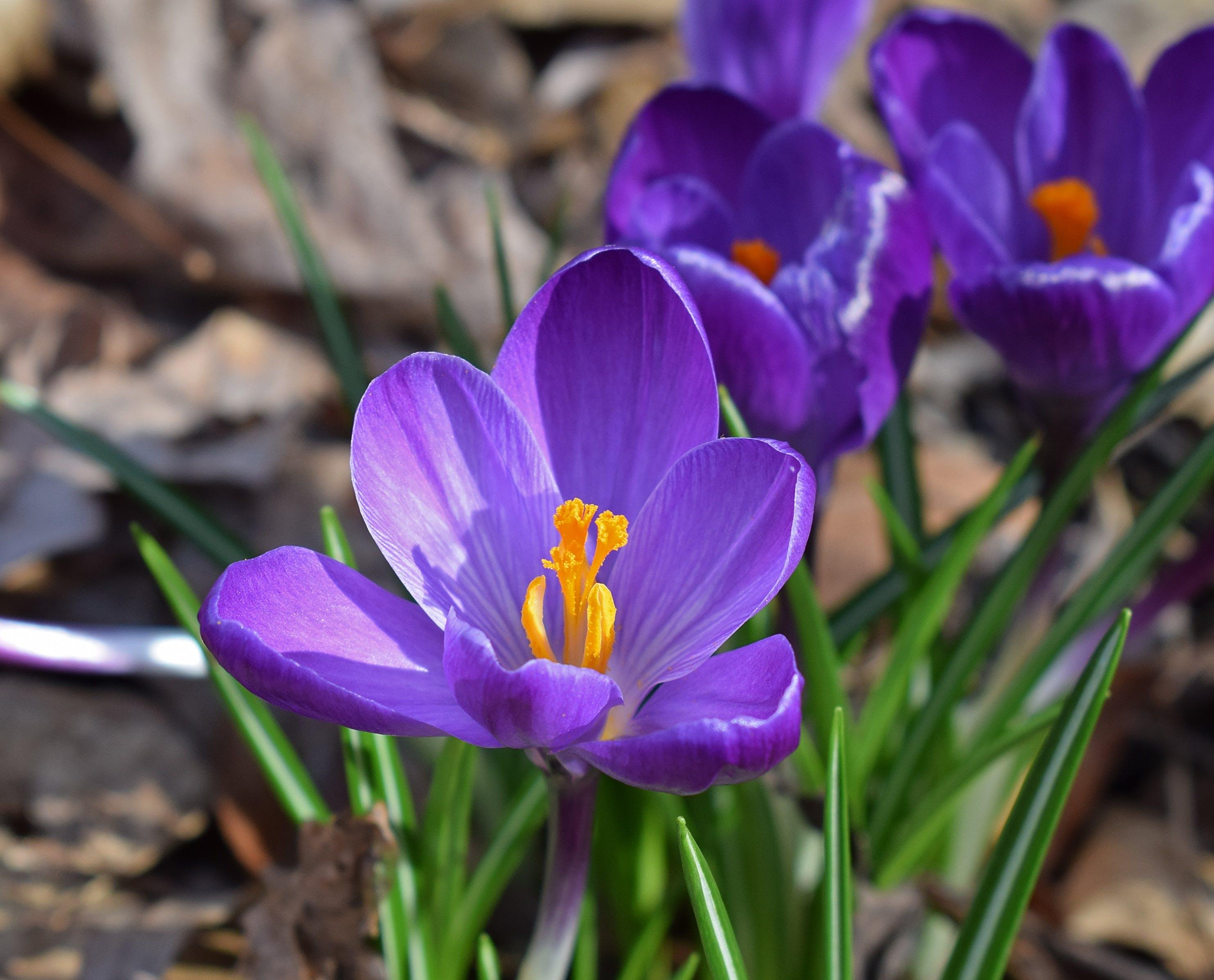 Základová fotografie zdarma na téma barva, fialová, flóra, jasný