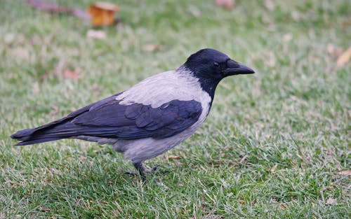 Close-up Photo Of Bird On Grass