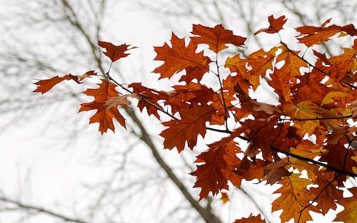 Бесплатное стоковое фото с ветви деревьев, дерево, дневной свет, живописный