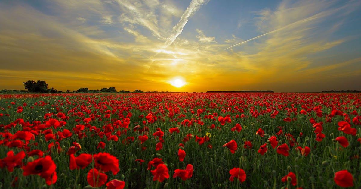 sunrise pictures free -