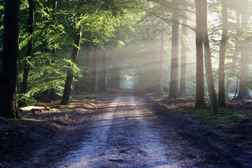 Foto profissional grátis de árvores, caminho, estrada, floresta
