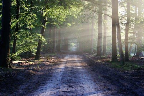 Безкоштовне стокове фото на тему «HD шпалери, дерева, дорога, краєвид»