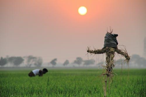 Man Planting on Field