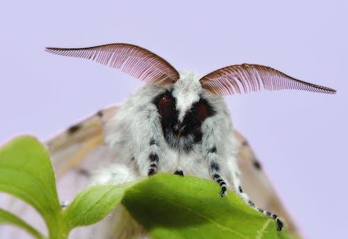 Gratis lagerfoto af close-up, gaffel hale, insekt, lille