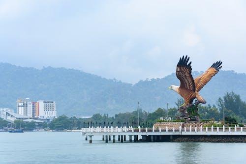 Photos gratuites de aigle, dehors, destination