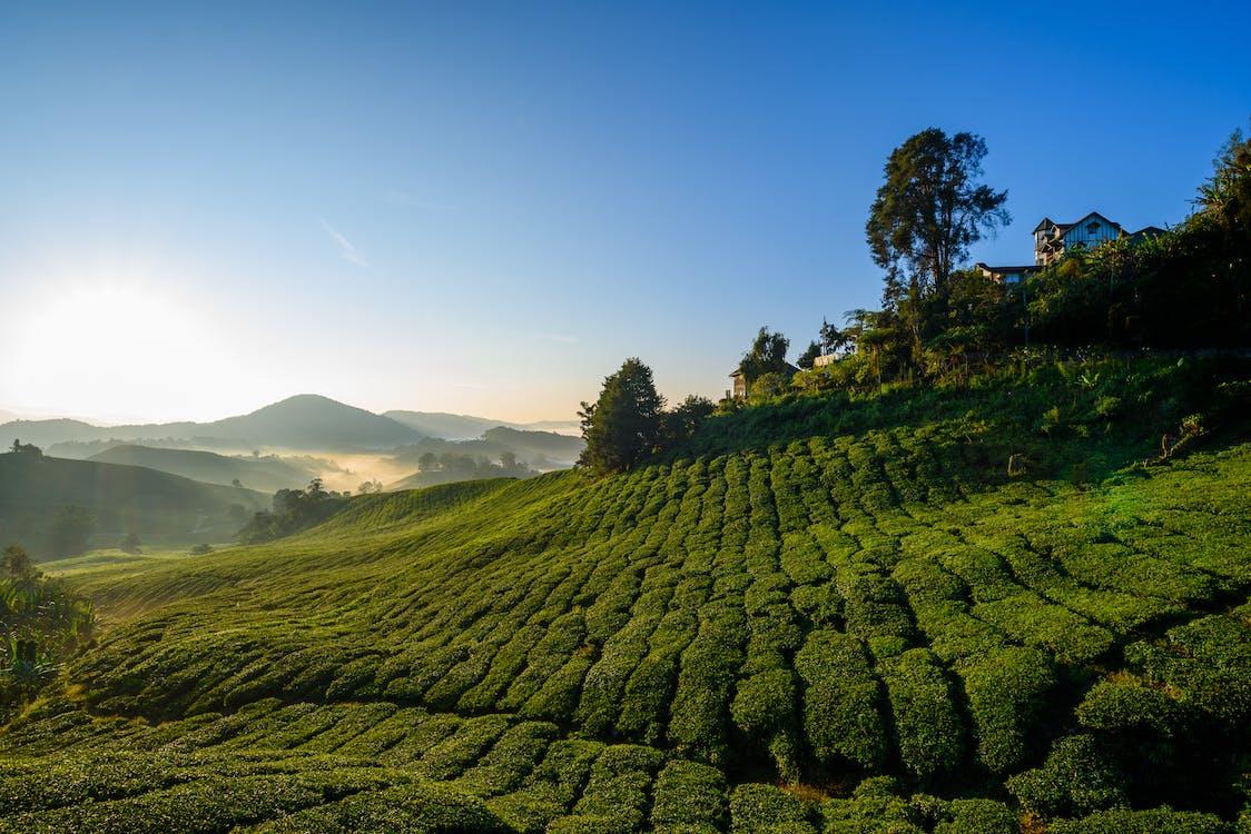 Malaysia memiliki lahan perkebunan karet yang sangat luas