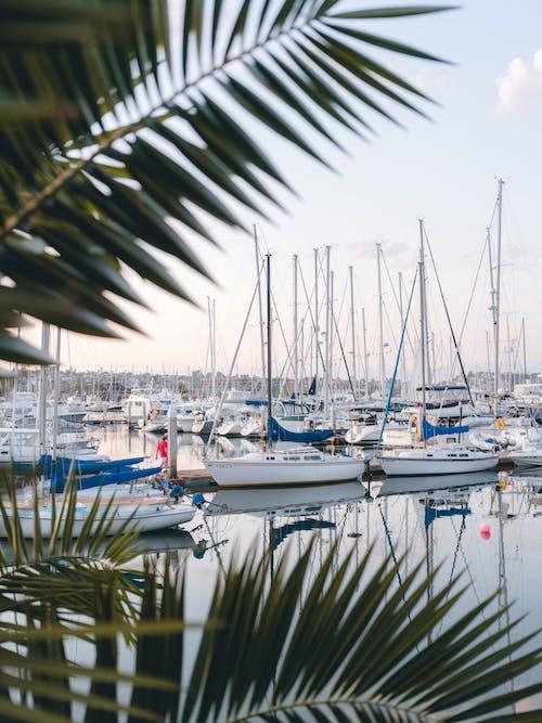 Foto profissional grátis de artesanato em água, baía, barcos, beira-mar