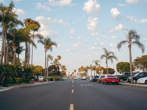Foto profissional grátis de árvores, asfalto, automóveis, carros