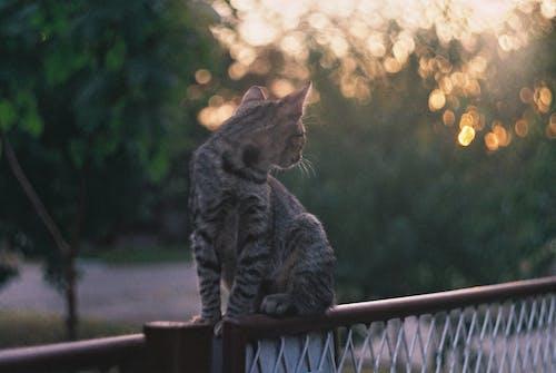 Free stock photo of cat, summer, sunset