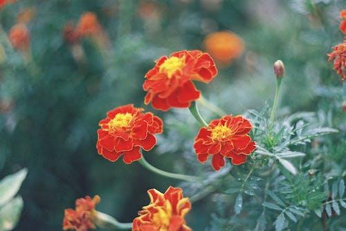 Free stock photo of flower, summer, summer flower