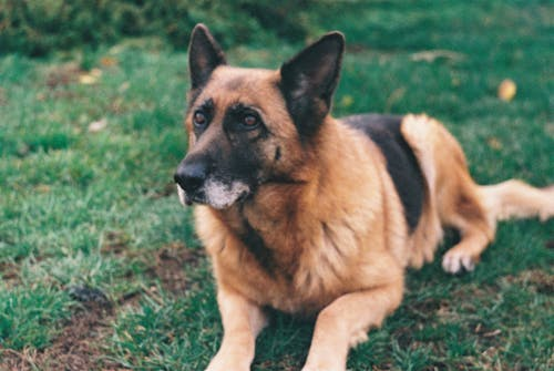 Free stock photo of dog, grass