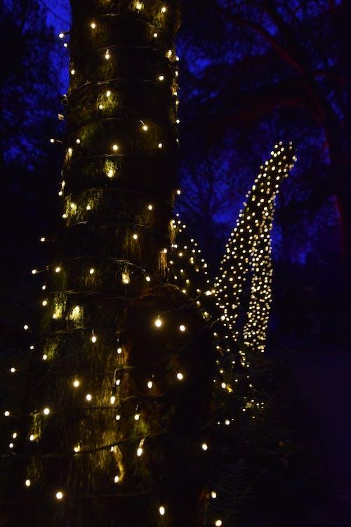 ツリーライト, ぼやけたライト, ぼやけて背景の無料の写真素材