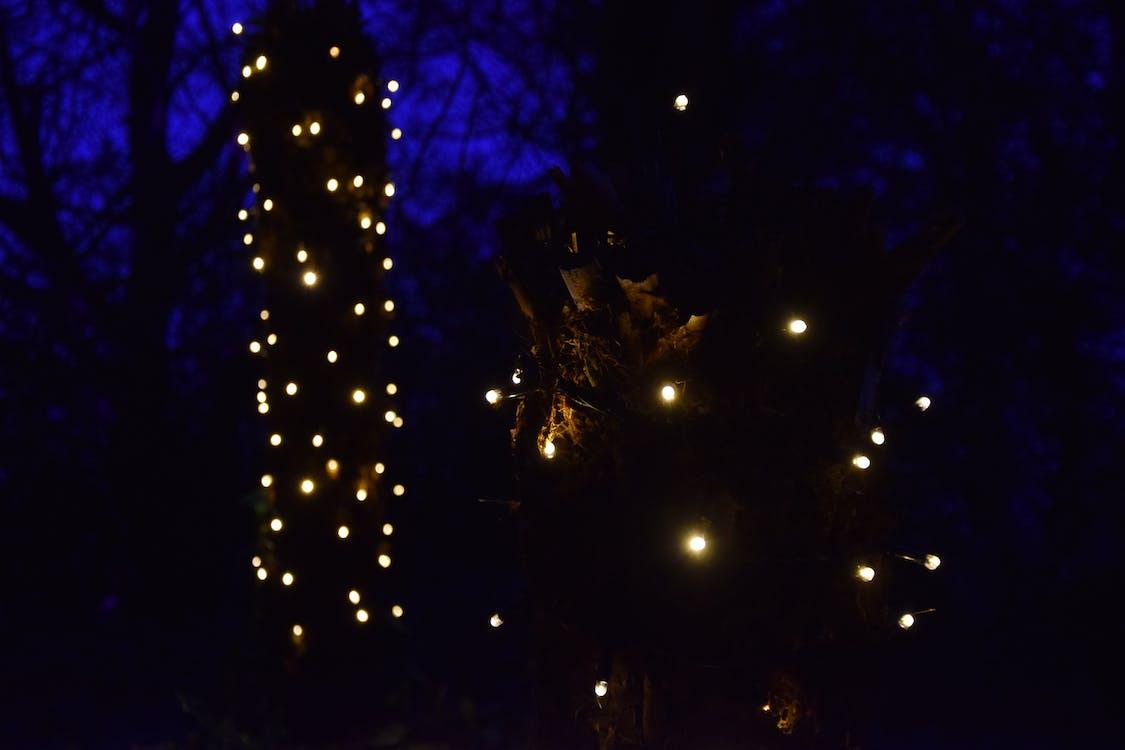 Free stock photo of blurry background, blurry lights, dark background