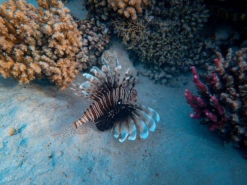 คลังภาพถ่ายฟรี ของ การถ่ายภาพสัตว์, การถ่ายภาพสัตว์ป่า, จมอยู่ใต้น้ำ, ชีววิทยา