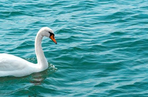 Δωρεάν στοκ φωτογραφιών με Βαλτική θάλασσα, γνέφω, ζώο, θάλασσα